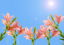 Pink lilies and sky Stock Photography