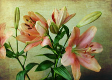 Pink lilies on a vintage background. Textured bunch of elegant pink lilies on a vintage wallpaper with grunge effects vector illustration