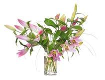 Pink Lilium in studio Stock Photography