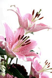 Pink lillies. Pink lilly in arrangement Royalty Free Stock Photography