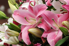 Pink lilly flower Royalty Free Stock Image