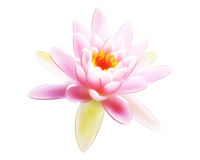 Pink Lilly Illustration Royalty Free Stock Photo