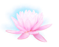 Pink Lilly Illustration Royalty Free Stock Image