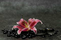 Pink Lily Stock Image