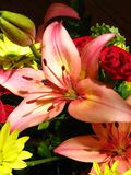 Pink lily. Arrangement Stock Images