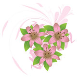 Pink lily. Background with green leaves isolated on white Royalty Free Stock Image