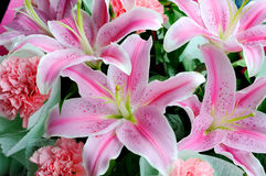 Pink lily backgrounds. Close up pink flowers lily Stock Photo