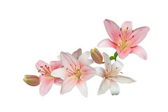 Pink Lily Bouquet Stock Images