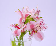 Pink lily bouquet in transparent glass on gray background Stock Photo