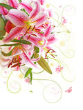 Pink Lily Bouquet. Royalty Free Stock Image