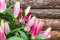 Pink lily buds. On the background wall with pine bark. Selective focus Royalty Free Stock Image