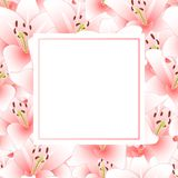 Pink Lily Flower Banner Card. Vector Illustration.  vector illustration