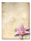 Pink lily flower old brown on grunge paper Stock Image