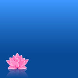 Pink Lily Flower in Still Blue Water Stock Photo