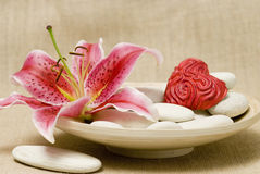 Pink lily flower and stones Stock Image