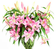 Pink lily flowers Royalty Free Stock Image