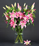 Pink lily flowers Stock Photography