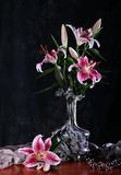 Pink Lily Flowers Stock Images