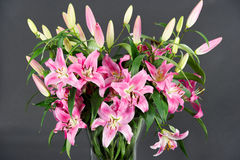 Pink lily flowers bouquet Stock Images