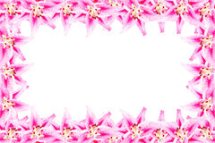 Pink lily frame on white background Royalty Free Stock Photo