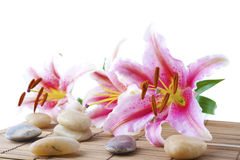 Pink lily and therapy stones Stock Image