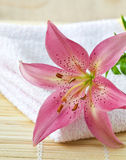 Pink lily and towel Stock Photos