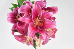 Pink lily in vase Stock Photos