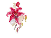 Pink lily watercolor vector background Royalty Free Stock Photos