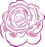 Pink Line Rose. Pink rose formed by lines and splashes on leaves vector illustration
