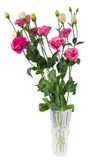Pink lisianthus flowers in vase. Isolated on white background Stock Image