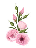Pink lisianthus flowers. Vector illustration. Stock Images