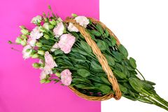 Pink lisianthus in natural wicker basket. Beautiful pink lisianthus in natural wicker basket, pink and white background, directly above, top view, copy space Stock Photo