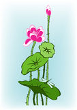 Pink lotus. With dragonfly on blue background Stock Photography