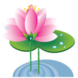 Pink lotus. On the white background Royalty Free Stock Images