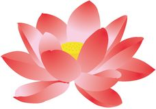 Pink lotus. Illustration of a pink lotus Royalty Free Stock Photography
