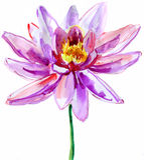 Pink lotus royalty free illustration