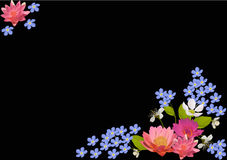 Pink lotus and blue flowers on black Stock Images