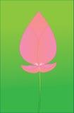 Pink lotus boom Royalty Free Stock Photos