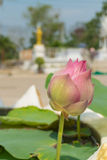 Pink lotus bud with the leaf Royalty Free Stock Photos