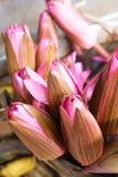 Pink lotus buds Royalty Free Stock Images