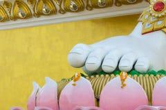 Pink lotus feet of the buddha Royalty Free Stock Image