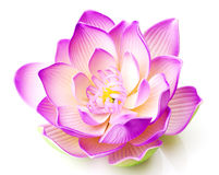 Pink lotus flower in bloom. 3d illustration of pink lotus flower in bloom, white background Royalty Free Stock Photos