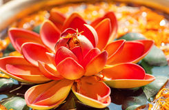 Pink Lotus flower in bowl with fresh water. Sacred plant in Hinduism and Buddhism. Royalty Free Stock Photo