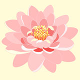 Pink lotus flower close up. vector illustration Royalty Free Stock Photo