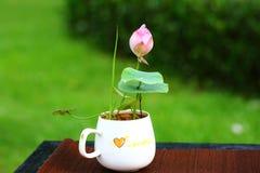 Pink Lotus Flower. The cute pink lotus flower in shenzhen honghu park, China Royalty Free Stock Image