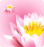 Pink lotus flower - forces of nature theme Royalty Free Stock Photos