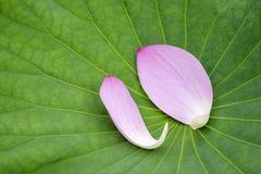 Pink lotus flower petals Royalty Free Stock Image