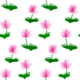 Pink lotus flower Stock Image