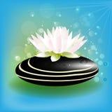 Pink lotus flower on spa stone logo image background. Lotus flower on black spa stone logo on water lake background vector template image Royalty Free Stock Photos