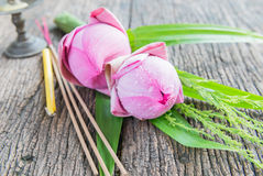 Pink lotus flower on wood background Royalty Free Stock Photos